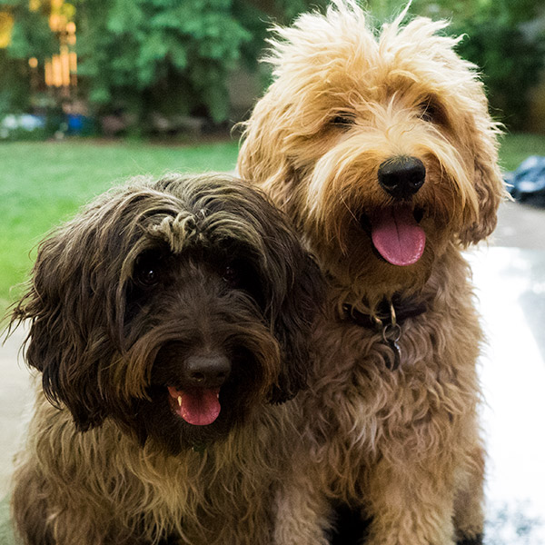 Fynnley & Freddie